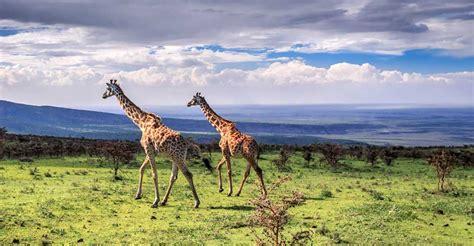 Giant Floor by Ngorongoro Crater African Safaris Natural Habitat
