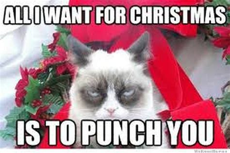 Merry Christmas Cat Meme - funny christmas memes 24 pics