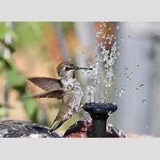 78 Best Hummingbird Fountains Images On Pinterest