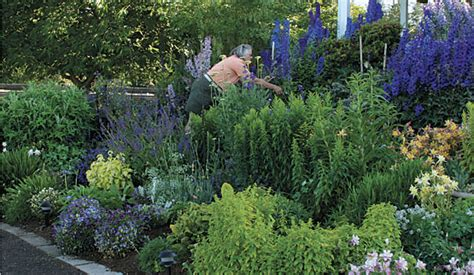 ask the expert 7 tips to grow cut flowers in a tiny garden
