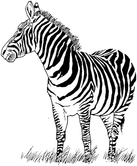 zebra coloring page free printable zebra coloring pages for