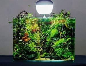 Die Besten Aquarien : die besten 25 nano aquarium ideen auf pinterest ~ Lizthompson.info Haus und Dekorationen