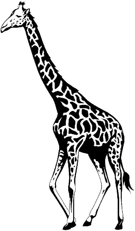 We found for you 15 giraffe clipart black and white png images with total size: Clipart Panda - Free Clipart Images