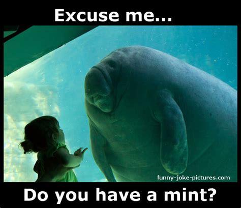 Manatee Memes - aquarium manatee meets little girl funny joke pictures