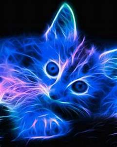 1000 images about Neon Kittens on Pinterest
