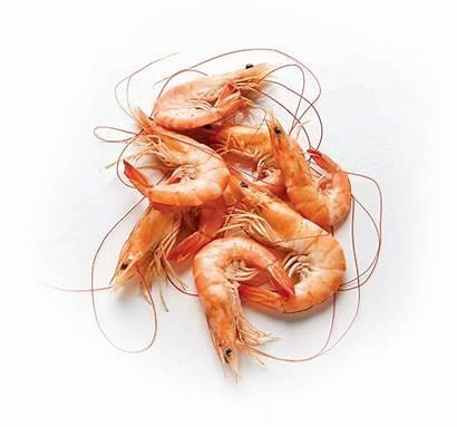 Shrimp Transparent Pluspng Featured Categories Related