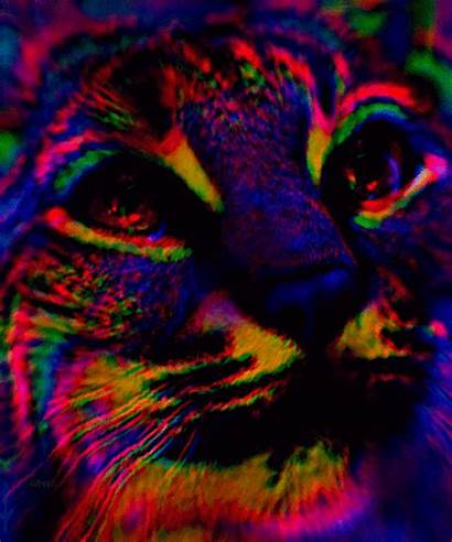 Trippy Cat Weed Dope Smoke Psychedelic Lsd