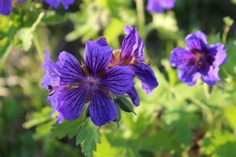 Blumen Für Balkon Winterhart by Blumen Pflanzen Werkstatt Der Blumenladen