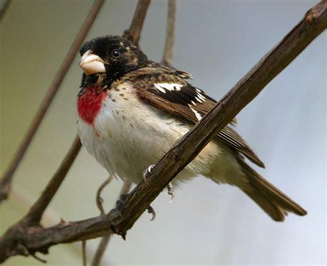 john kormendy ontario canada birds