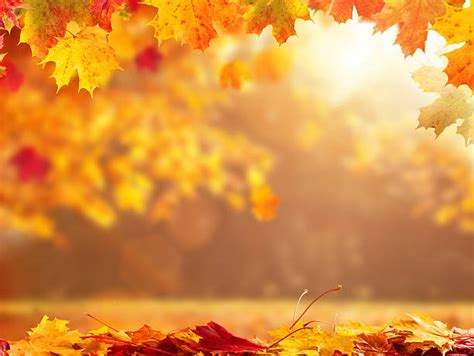 Autumn Images Royalty Free Autumn Pictures Images And Stock Photos Istock