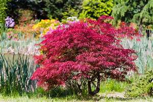 Tuer Un Arbre Avec De L Acide : comment planter un arbuste un arbre feuillu ~ Dailycaller-alerts.com Idées de Décoration