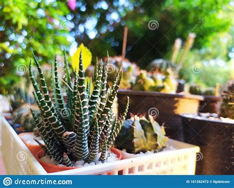 Cactus Garden In Thailand Watercolor Desert Flowers Stock ...