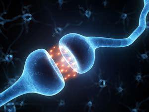 science  thomas suedhofs nobel prize news