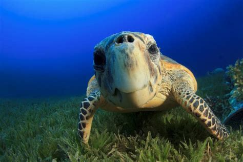 19 Weird And Wonderful Turtle And Tortoise Species