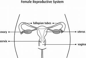 What Is Uterine Cancer