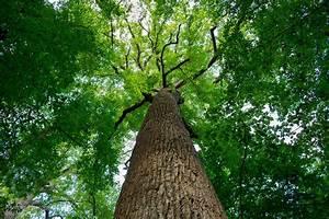 Trees For Soil Erosion Control