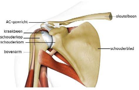Artrose in schoudergewricht