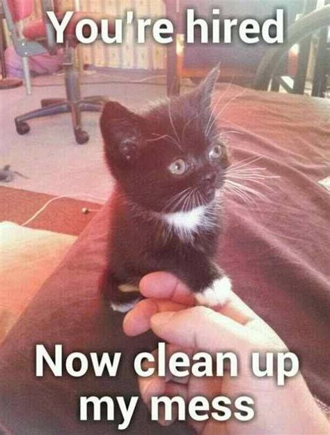 Funny Cat Memes Clean - yup this funny cat is saying quot you are hired now clean up my mess quot hired boss cleanupcrew