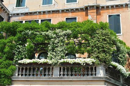 balkon sichtschutz mit pflanzen balkon sichtschutz ideen balkon de liefert profi tipps