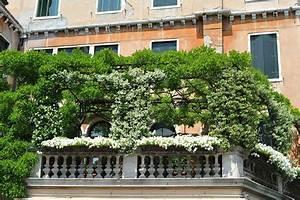 Pflanzen Sichtschutz Balkon : balkon sichtschutz ideen liefert profi tipps ~ Eleganceandgraceweddings.com Haus und Dekorationen
