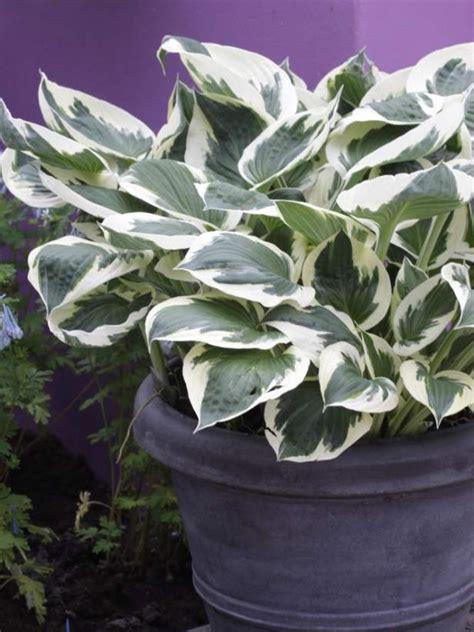 freeze proof plants hgtv