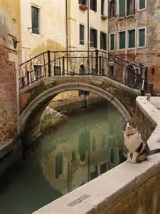 Venice Italy Cats