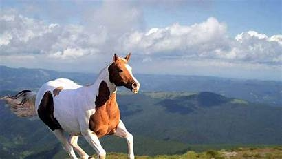 Horse Wallpapers Horses Running Amazing Awesome Move