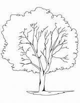 Coloring Tree Pages Printable sketch template