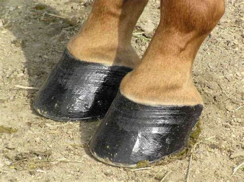 hoof care equine healthy horse