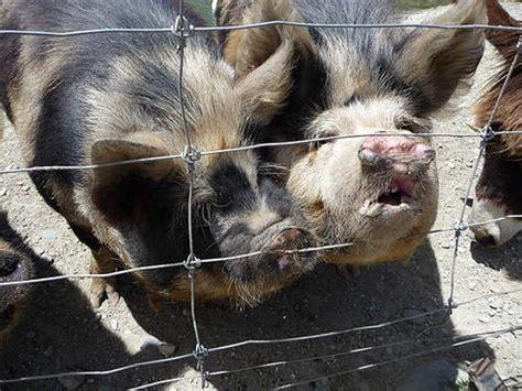 Flat Out Ugly and Disturbing Animals (24 pics) Izismile com