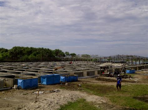 grouper farm