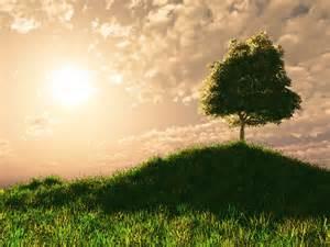 Tree On Hill