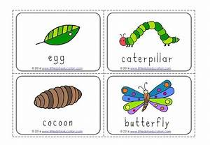 The Very Hungry Caterpillar Theme Free Life Cycle Of A