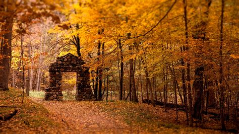 Fall Backgrounds by Fall Forest Wallpapers Hd Desktop And Mobile Backgrounds