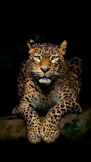 Leopard iPhone Wallpapers | Jaguar animal, Wild animal ...