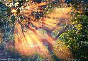 Natural, Sun, Rays, In, The, Garden, At, Sunset, Stock, Photo, -, Download, Image, Now