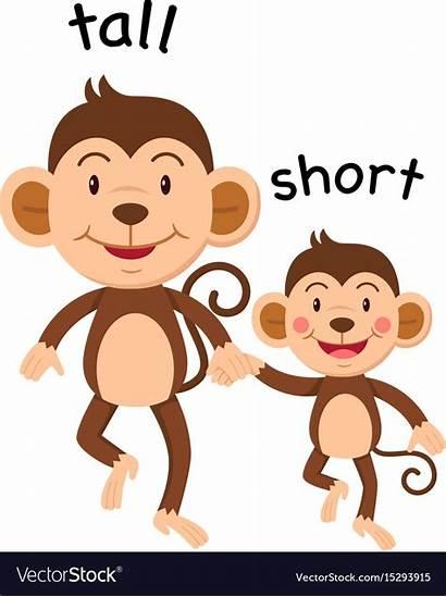 Tall Short Opposite Words Vector Opposites Preschool
