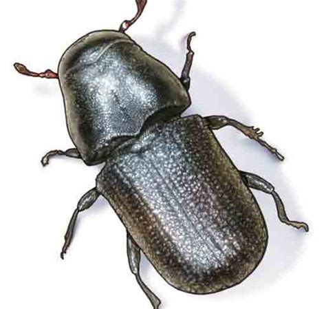 beetles   caused explosion  bc wood facility