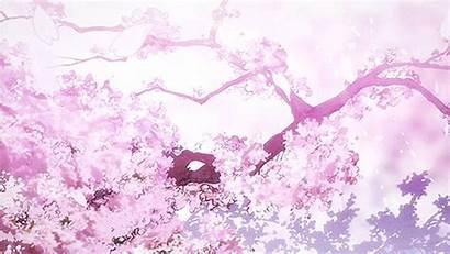 Anime Cherry Scenery Sakura Blossom Blossoms Japanese