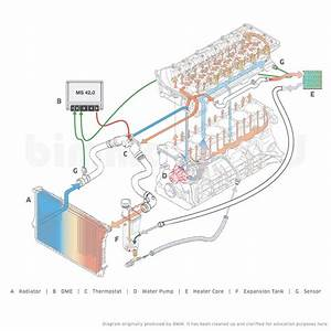 Why Are Bmw Cooling Systems So Apoplectically Complicated