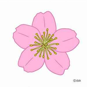 Spring blossoms clipart - Clipground