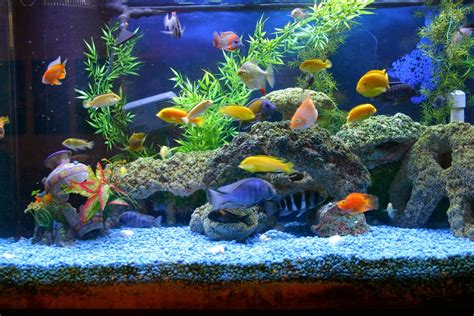 fish aquariums myths about keeping an aquarium at home