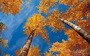 HD Desktop Wallpapers HD Wallpapers & Backgrounds autumn ...