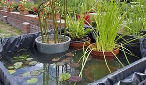 Plante Filtrante Pour Bassin : les mares au jardin hortical ~ Louise-bijoux.com Idées de Décoration