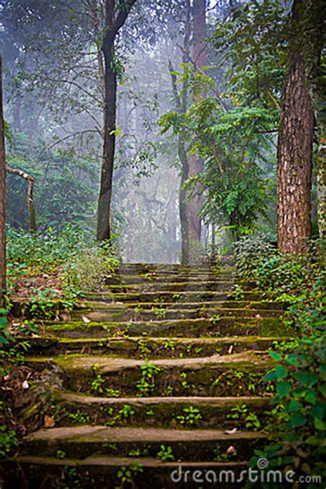 stone stairs   forest stock images image