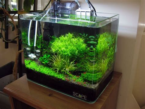 Aquascape Shrimp Tank by Shrimp Tank With Azoo Palm Filter Aquarium
