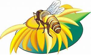 Abejas Clip Art Gif Gifs animados abejas 2387821