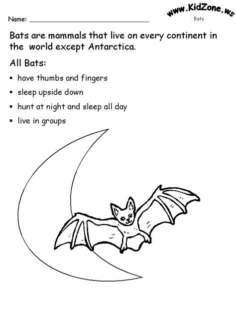 bat activity sheets about bats 843   aboutbats