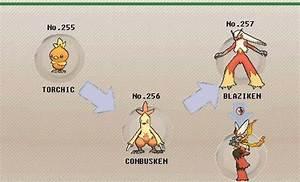Blaziken | Pokémon Amino