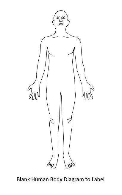 Human Diagram Blank Organs Anatomy Unlabeled Drawing